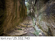 Купить «Ancient Roman roads excavated from the tufa rock, of Etruscan origin. Pitigliano, Tuscany, Italy. March 2009», фото № 25332743, снято 15 декабря 2017 г. (c) Nature Picture Library / Фотобанк Лори