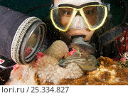 Купить «Portrait of woman scubadiver (Apolinar Quinto) gazing at a large nudibranch, Malapascua Island, Visayan Sea, Philippines», фото № 25334827, снято 27 мая 2019 г. (c) Nature Picture Library / Фотобанк Лори