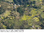 Купить «Aerial view of terraced fields and houses, Himalayan foothills, Nepal, November 2007», фото № 25347679, снято 16 июля 2018 г. (c) Nature Picture Library / Фотобанк Лори