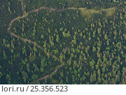 Купить «Aerial view of path in mountain forest of Norway spruce (Picea abies) Mountain ash / Rowan (Sorbus aucuparia) and the Dwarf mountain pine (Pinus mugo)...», фото № 25356523, снято 17 июля 2018 г. (c) Nature Picture Library / Фотобанк Лори