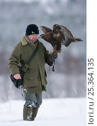 Golden eagle (Aquila chrysaetos) captive, on arm of falconer Andy Hughes, Scotland, UK, model released. Стоковое фото, фотограф Pete Cairns / Nature Picture Library / Фотобанк Лори