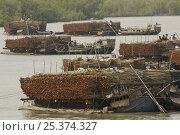 Купить «Charcoal wood collectors with boats loaded with Goran wood (Ceriops sp) harvested from the mangrove forest, Sundarbans, Khulna Province, Bangladesh, April 2006», фото № 25374327, снято 27 мая 2019 г. (c) Nature Picture Library / Фотобанк Лори