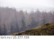 Купить «Snow blizzard sweeping Pyrenees mountain ridges in autumn, France / Spain border, 2008.», фото № 25377159, снято 18 января 2019 г. (c) Nature Picture Library / Фотобанк Лори