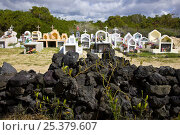 Купить «Cemetery on Isabela Island, Galapagos, January 2009», фото № 25379607, снято 22 марта 2019 г. (c) Nature Picture Library / Фотобанк Лори