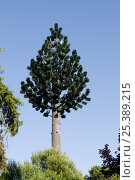 Купить «Landscape integration of radio antennae disguised as tree, Lisbon, Portugal, July 2008», фото № 25389215, снято 23 января 2018 г. (c) Nature Picture Library / Фотобанк Лори