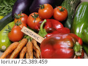 Купить «Freshly harvested home grown organic vegetables with 'organic' label, carrots, peppers, courgettes, cucumbers, aubergine, tomatoes, UK», фото № 25389459, снято 17 марта 2018 г. (c) Nature Picture Library / Фотобанк Лори