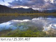 Купить «Reflections in Vermillion Lakes, Banff National Park, Alberta, Canada», фото № 25391407, снято 4 июля 2020 г. (c) Nature Picture Library / Фотобанк Лори