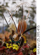 Купить «Traditional feathered headdress of Huli Wigmen from the Tari area, Southern Highlands Province. Mount Hagen, Western Highlands Province, Papua New Guinea. September 2004», фото № 25395415, снято 21 июля 2018 г. (c) Nature Picture Library / Фотобанк Лори