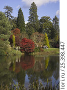 Купить «Landscaped gardens and lake in autumn, Sheffield Park Gardens, East Sussex, UK», фото № 25398447, снято 26 марта 2019 г. (c) Nature Picture Library / Фотобанк Лори
