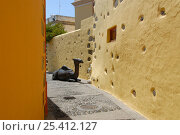 Купить «Bronze camel sculpture in the narrow streets of Aguimes Village, Gran Canaria Island, the Canary Isles, Spain, September 2007», фото № 25412127, снято 19 июля 2018 г. (c) Nature Picture Library / Фотобанк Лори