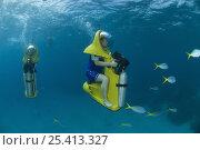 Купить «Tourists on Scubadoos from the Great Adventures Pontoon watching fish. Great Barrier Reef, Queensland, Australia 2006», фото № 25413327, снято 25 мая 2018 г. (c) Nature Picture Library / Фотобанк Лори