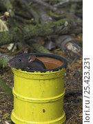 Купить «Black fancy rat {Rattus sp.} in pipe, captive, UK», фото № 25423231, снято 18 августа 2018 г. (c) Nature Picture Library / Фотобанк Лори