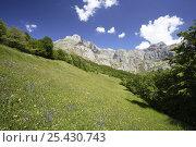 Купить «Upland meadow in summer, Picos de Europa, Asturias, Spain», фото № 25430743, снято 17 августа 2018 г. (c) Nature Picture Library / Фотобанк Лори