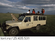 Купить «Cheetah 'Queenie' sitting on safari vehicle during filming of BBC NHU 'Big Cat Diary', Masai Mara GR, Kenya», фото № 25435531, снято 23 июля 2018 г. (c) Nature Picture Library / Фотобанк Лори