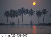 Купить «Dawn on the Backwaters, Kerala, India», фото № 25439667, снято 18 сентября 2018 г. (c) Nature Picture Library / Фотобанк Лори