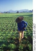 Купить «Thai woman in Fields, nr Mae Hong Son, Thailand», фото № 25441667, снято 19 июля 2018 г. (c) Nature Picture Library / Фотобанк Лори