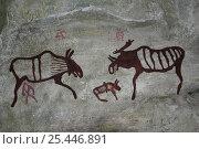 Купить «Rock paintings of Moose /  Elk from ancient site at Lena River shore, Yakutia, Siberia, Russia», фото № 25446891, снято 2 апреля 2020 г. (c) Nature Picture Library / Фотобанк Лори