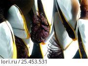 Купить «Goose barnacles (Lepas anatifera) found attached to drifting oceanic buoy, feeding, Atlantic ocean», фото № 25453531, снято 26 сентября 2018 г. (c) Nature Picture Library / Фотобанк Лори
