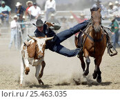 Купить «Steer Wrestling, Wanaka Rodeo, Wanaka, New Zealand.», фото № 25463035, снято 26 апреля 2018 г. (c) Nature Picture Library / Фотобанк Лори