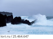 Купить «Waves crashing on coast, Marion Island, Prince Edward Is sub-antarctica», фото № 25464647, снято 17 августа 2018 г. (c) Nature Picture Library / Фотобанк Лори