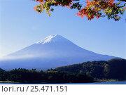 Купить «Mt Fuji + Kawaguchi Lake, Yamanashi, Japan», фото № 25471151, снято 7 августа 2020 г. (c) Nature Picture Library / Фотобанк Лори