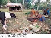 Купить «Children play with Pig's head after traditional slaughter, Espirito Santo, Vanuatu», фото № 25476071, снято 21 июля 2018 г. (c) Nature Picture Library / Фотобанк Лори