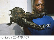 Stuffed West African dwarf crocodile (Osteolaemus tetraspis) for sale, Democratic Republic of Congo. Стоковое фото, фотограф Jabruson / Nature Picture Library / Фотобанк Лори