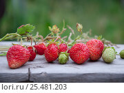 Strawberry and grass on wooden background. Rural still life with berries. Стоковое фото, фотограф Евгений Пидеркин / Фотобанк Лори