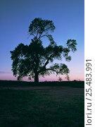 Купить «Black poplar tree silhouette {Populus nigra var betulifolia} UK», фото № 25483991, снято 18 сентября 2018 г. (c) Nature Picture Library / Фотобанк Лори