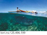 Купить «Whale shark held alive in shallow water. Pamilacan, Bohol, Philippines. 1997», фото № 25496199, снято 24 сентября 2018 г. (c) Nature Picture Library / Фотобанк Лори
