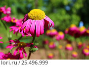 Цветок. Стоковое фото, фотограф Аня Шумкова / Фотобанк Лори
