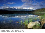 Купить «View over Patricia Lake, Jasper National Park, Alberta, Canada, North America», фото № 25499779, снято 28 мая 2020 г. (c) Nature Picture Library / Фотобанк Лори