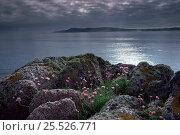 Купить «Thrift / Sea pinks (Armeria maritima), Isle of Mull, Scotland», фото № 25526771, снято 24 апреля 2018 г. (c) Nature Picture Library / Фотобанк Лори