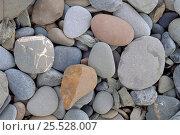 Купить «Water smoothed pebbles. St. Ninian's Cave Bay, Scotland.», фото № 25528007, снято 7 июля 2020 г. (c) Nature Picture Library / Фотобанк Лори