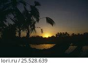 Купить «Sunset over Rice Paddy field, Bali.», фото № 25528639, снято 25 сентября 2018 г. (c) Nature Picture Library / Фотобанк Лори