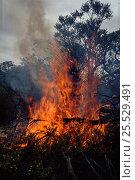 Купить «Australia bushfire, Perth. Western Australia.», фото № 25529491, снято 27 марта 2019 г. (c) Nature Picture Library / Фотобанк Лори