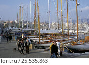 Купить «Spectators in the port of Cannes for the boat show, September 2004.», фото № 25535863, снято 21 августа 2018 г. (c) Nature Picture Library / Фотобанк Лори