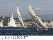 Купить «Classic yachts racing in Cannes Royal Regatta, France, 2007.», фото № 25538471, снято 21 августа 2018 г. (c) Nature Picture Library / Фотобанк Лори
