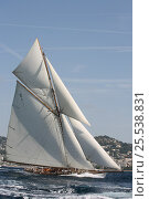 Купить «Classic yacht during Cannes Royal Regatta, France, 2007. All non-editorial uses must be cleared individually.», фото № 25538831, снято 21 августа 2018 г. (c) Nature Picture Library / Фотобанк Лори