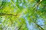 Лесной пейзаж - ветви берез на фоне голубого неба, фото № 25551643, снято 18 февраля 2017 г. (c) Зезелина Марина / Фотобанк Лори