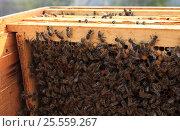 Пчелиные рамки. Стоковое фото, фотограф Денис Кошель / Фотобанк Лори