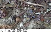 Купить «Many hermit crabs on beach, 4k», видеоролик № 25559427, снято 5 февраля 2017 г. (c) Михаил Коханчиков / Фотобанк Лори