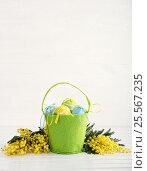 Mimosa and easter eggs. Стоковое фото, фотограф Юлия Младич / Фотобанк Лори
