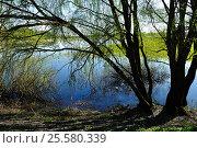 Купить «Spring landscape - willow at the bank of the river», фото № 25580339, снято 5 мая 2016 г. (c) Зезелина Марина / Фотобанк Лори