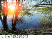 Купить «Spring landscape with willow under sunshine - spring colorful nature», фото № 25580343, снято 5 мая 2016 г. (c) Зезелина Марина / Фотобанк Лори