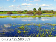 Купить «Spring landscape - river overgrown with yellow flowers», фото № 25580359, снято 7 июня 2016 г. (c) Зезелина Марина / Фотобанк Лори