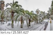 Купить «Снег на пальмах в Дендрарии города Сочи», эксклюзивное фото № 25581627, снято 29 января 2017 г. (c) Николай Сивенков / Фотобанк Лори