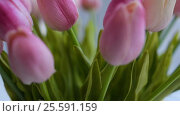 Купить «Close-up of a bouquet of tulips on a light background», видеоролик № 25591159, снято 21 февраля 2017 г. (c) Сергей Кальсин / Фотобанк Лори
