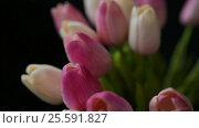 Купить «Close-up of a bouquet of tulips on a dark background», видеоролик № 25591827, снято 21 февраля 2017 г. (c) Сергей Кальсин / Фотобанк Лори