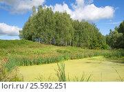 Купить «Летний пейзаж с лесом и прудом», фото № 25592251, снято 13 августа 2016 г. (c) Елена Коромыслова / Фотобанк Лори
